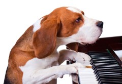 Music practice: How long? How often?